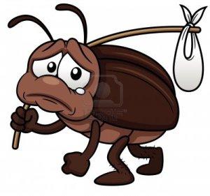 17 cockroach